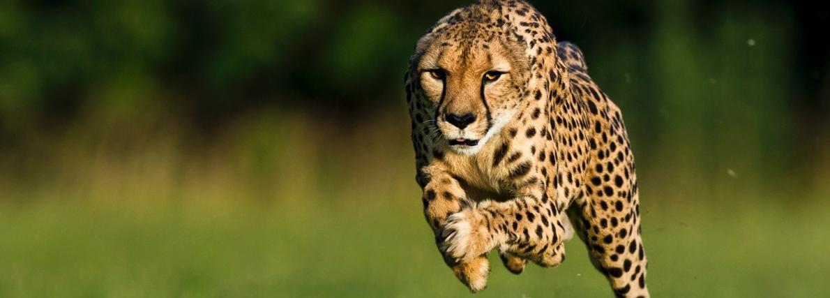 なぜ人類は100m走で8秒台を出せないのか?