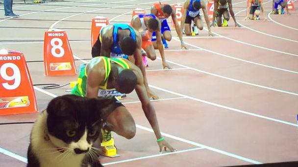 猫「50m走だとボルトより速いにゃん人間遅すぎ」