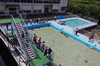 【その発想はなかった】小学校の屋外プールを優雅に泳ぐサメ、跳び箱を改造してつくられた水槽…廃校を活用した水族館が話題に!